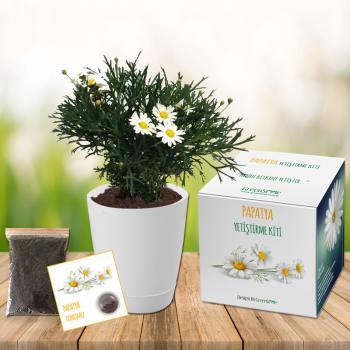 Chamomile Grow Kit
