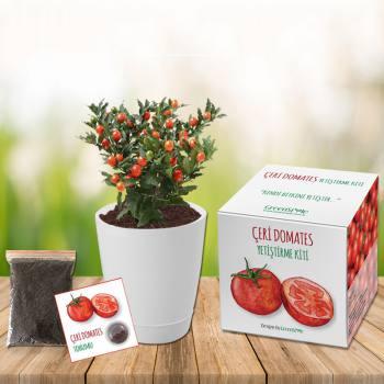 Cherry Tomato Growing Kit