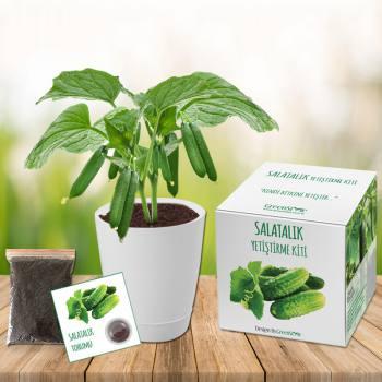 Cucumber Grow Kit