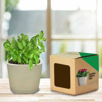 Hobby Planter Kit - Basil