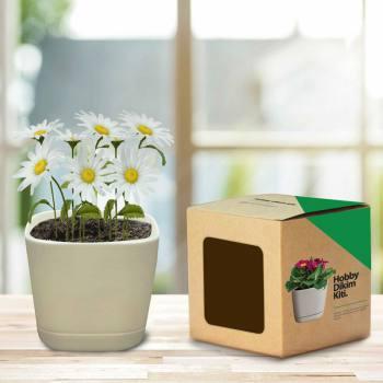 Hobby Planting Kit - Daisy