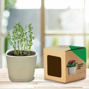 Hobby Planting Kit - Thyme