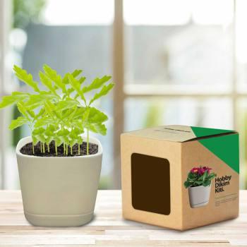 Hobby Planting Kit - Wild Flower