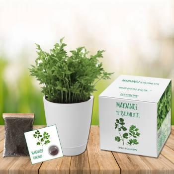 Parsley Grow Kit