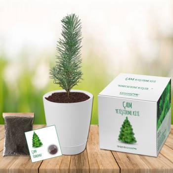 Pine Grow Kit