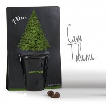 Pine Planting Kit