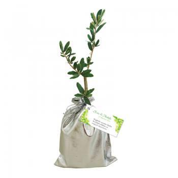 Promotion Olive Sapling
