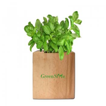 Wooden Potted Basil Planting Kit